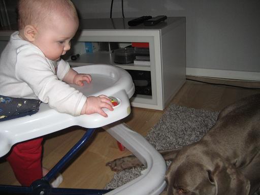Elise kör över Vackraste hundens tassar för att komma närmare sin idol!