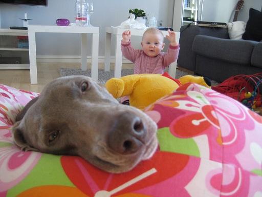 Mest hund och lite mindre bebis