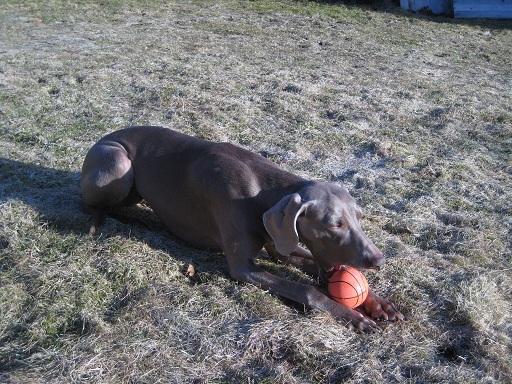 Undra och jag hängde i trädgården när Elise sov i eftermiddags. Undra lekte med bollen och jag röjde i en av många rabatter