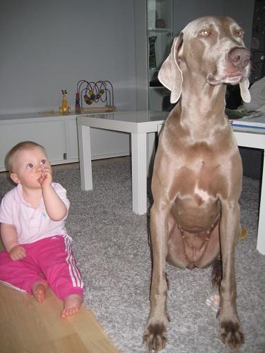 Vackraste hunden blir inte bara väldigt lång liggandes, hon blir väldigt hög sittandes också!