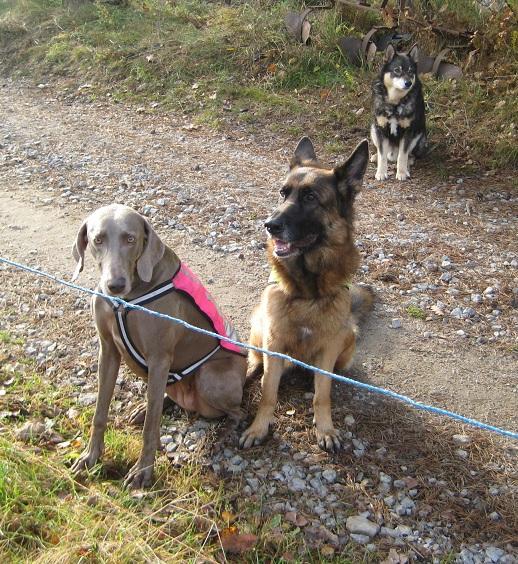 ...och alla hundar fick snällt vänta utanför.